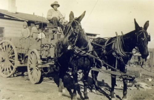 a.r. with mule team - 1919 - Copy (3) - Copy - Copy